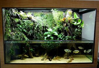 Beautiful Aquarium Terrarium Combination