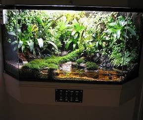 Beautiful Jungle Style Vivarium