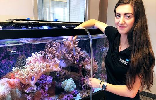Aquarium Cleaning and doing Fish Tank Maintenance