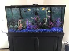 After Aquarium Maintenance