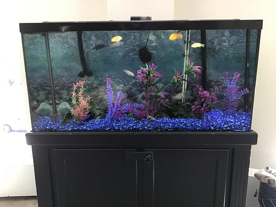Standalone aquarium After Cleaning