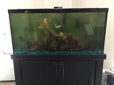 Before Aquarium Maintenance