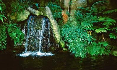 Beautiful Waterfall Style Vivarium