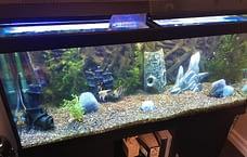 After Aquarium Cleaning