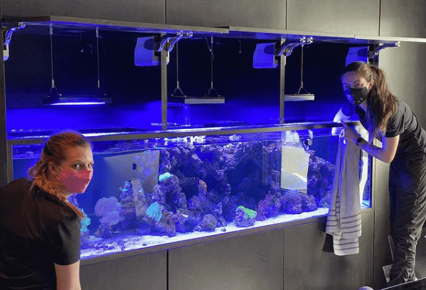 Employees Cleaning A Fish Tank