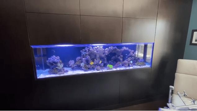 Thumbnail of Aquarium in Office Space