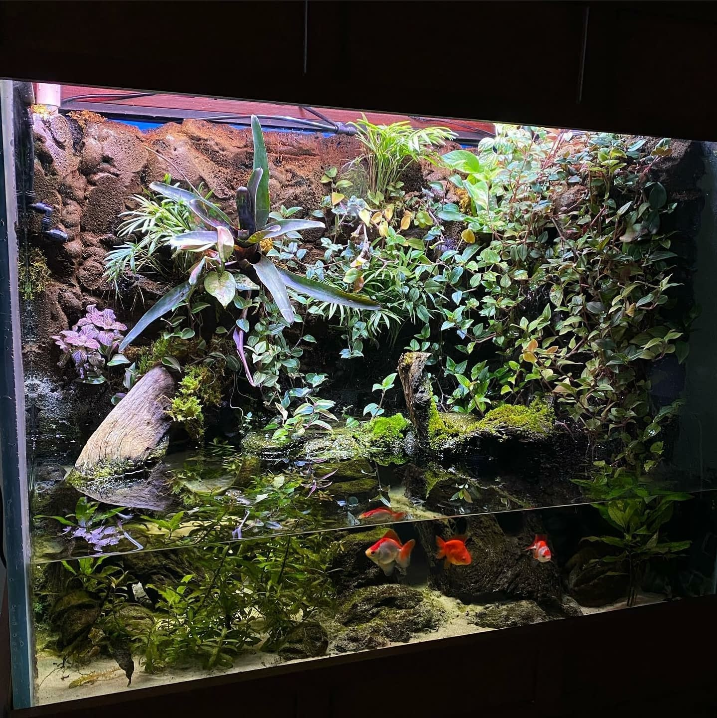 Cleaned Aquarium With Beautiful Planted Vegetation