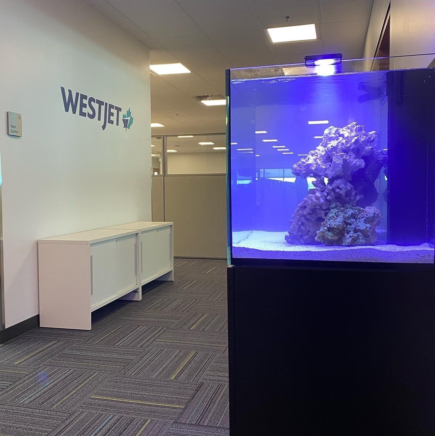 Installing a Fish Tank at WestJet