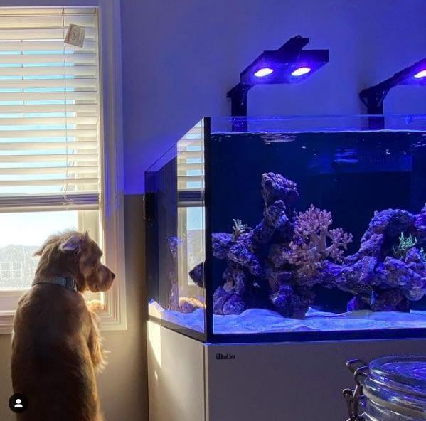 Dog Enjoying Fish Tank