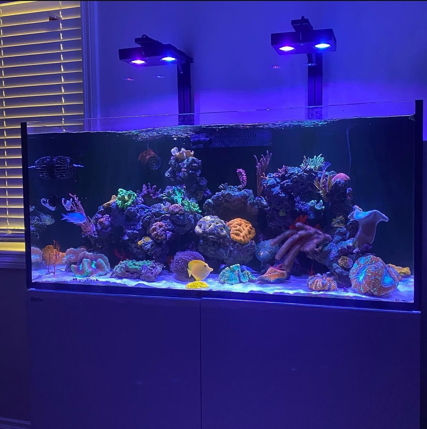 Beautiful Aquarium with Fish