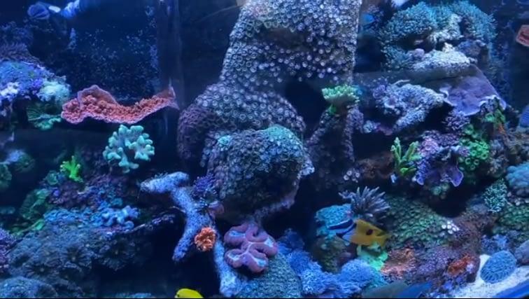 Nick's Aquarium